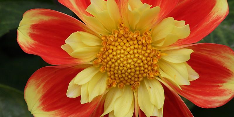 Flower_Randi-crop